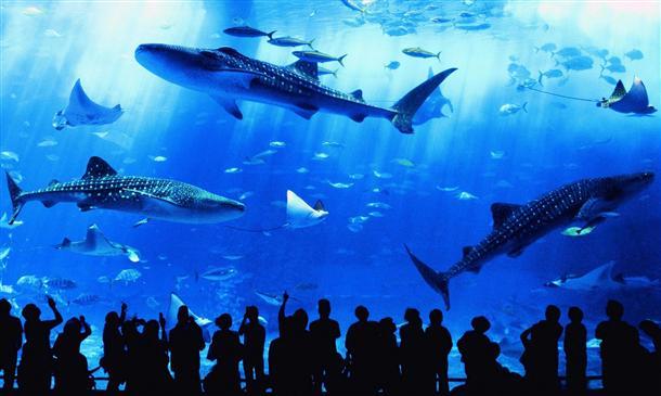101年ぶり新種発見のイソギンチャクが沖縄の水族館に!?