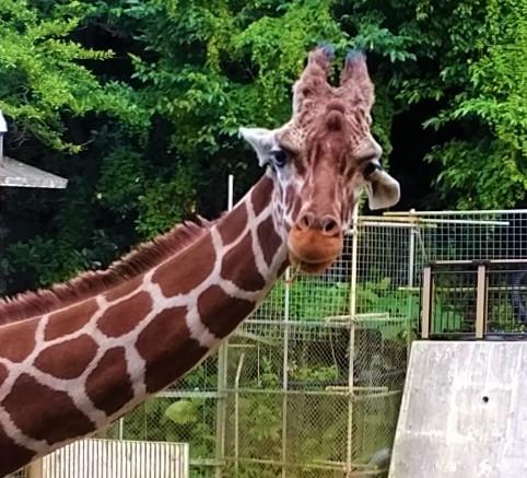 沖縄唯一の動物園でかわいい動物たちとふれ合える『こどもの国』(沖縄市)