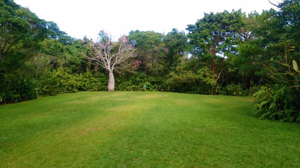 亜熱帯の自然豊かな森を楽しむ散策路『ビオスの丘』(うるま市)
