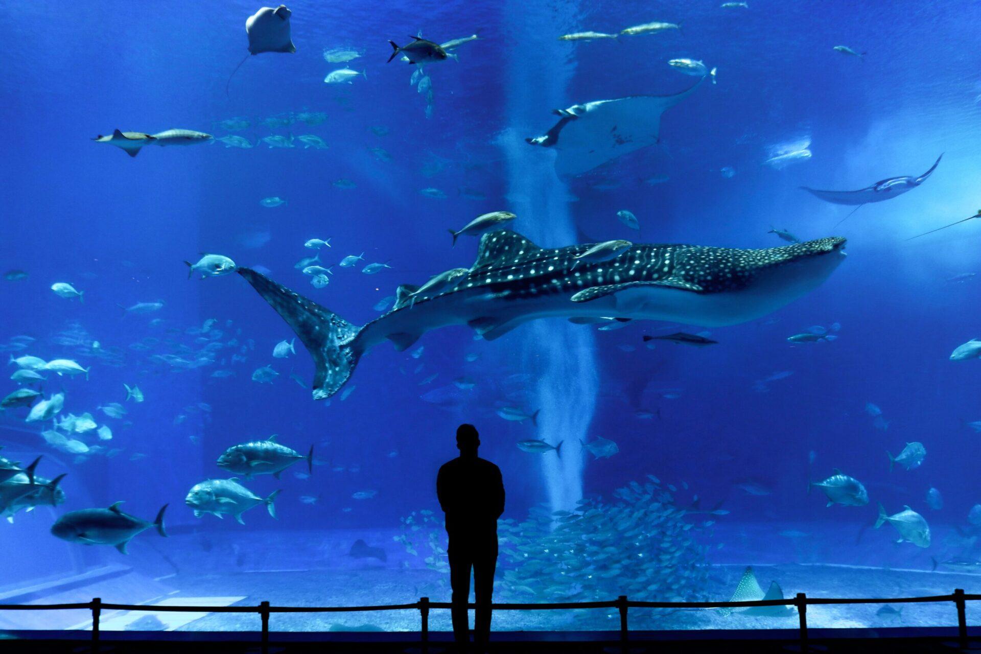 沖縄観光がコロナの影響で過去最悪な状況