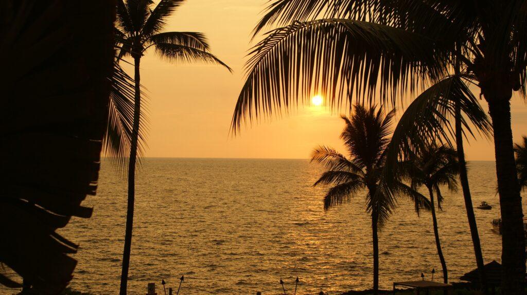 沖縄の豊かな海が育む海ぶどう